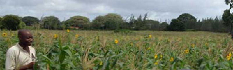 """Continuano le attività del progetto """"Matunda Sabaki: un frutto per il Sabaki"""" in Kenya"""