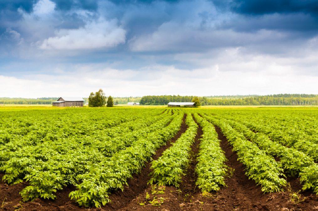 SVE in Finlandia per attività legate all'agricoltura sostenibile