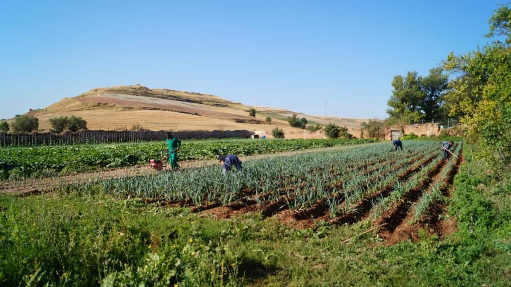 Progetto Burgos Solidaria y Sostenible